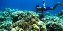 Genetics may explain why elite divers of Southeast Asia can hold their breath so long