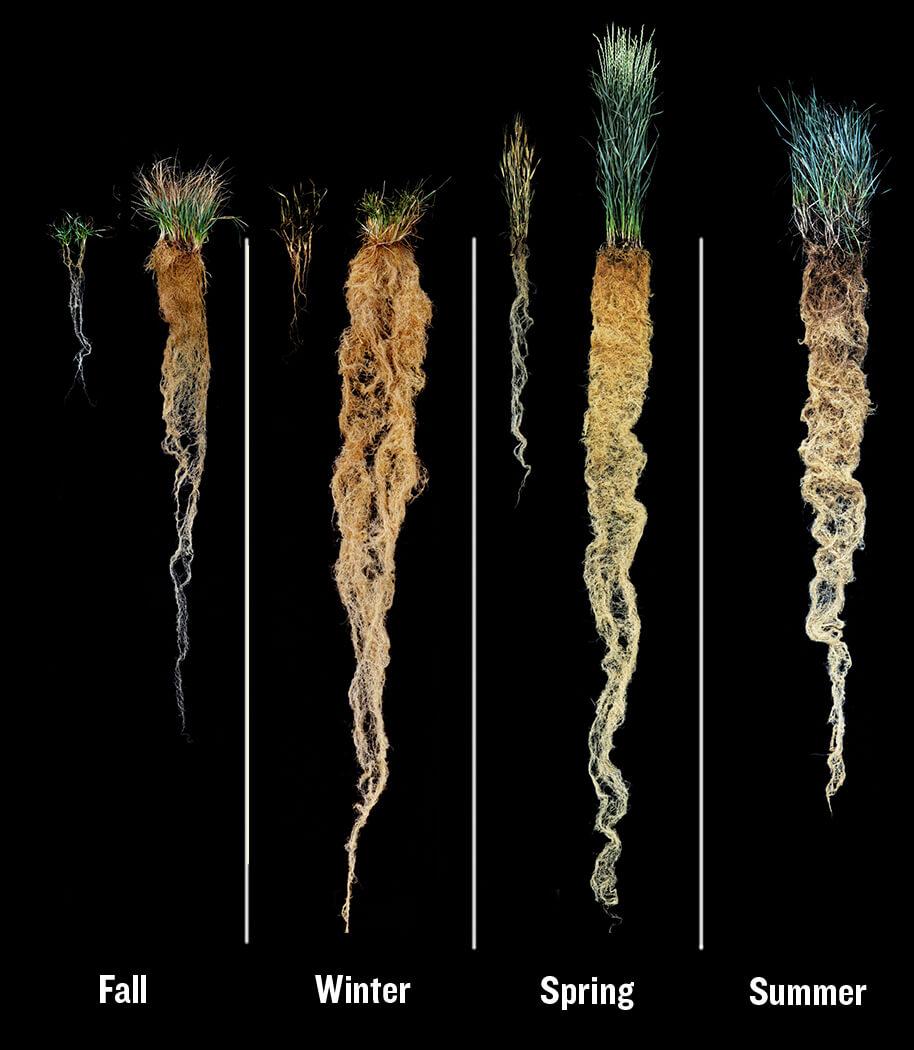 Article carbonplants Inline