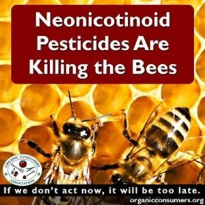bees exposed to systemic pesticides are unable to gather enough pollen neonicotinoids kill honeybees
