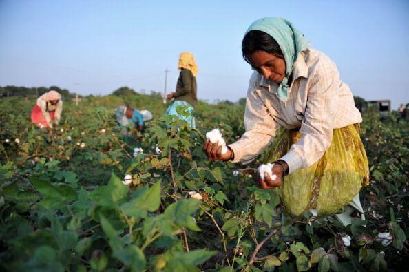 cotton 4 25 18
