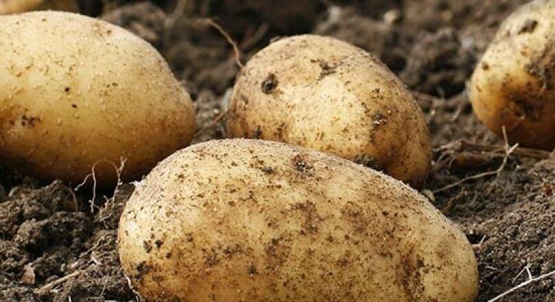 potato 4 4 18