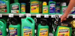 Russia threatens to restrict soy imports from Brazil over use of controversial weed killer glyphosate