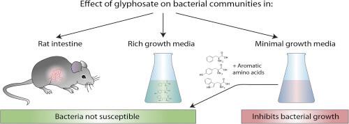 bacteria glyphosate