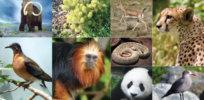 f e biodiversity