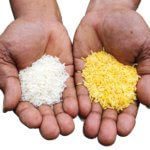 Golden Rice Michael Pollan 373237