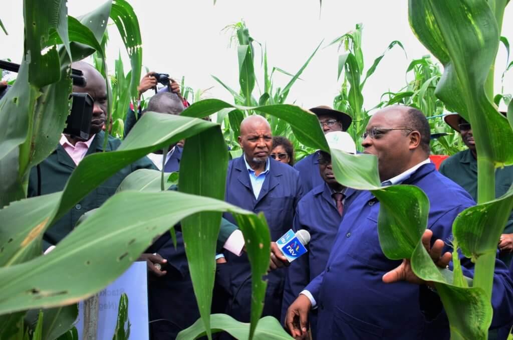 G Bor checking out Kenya Bt maize test field