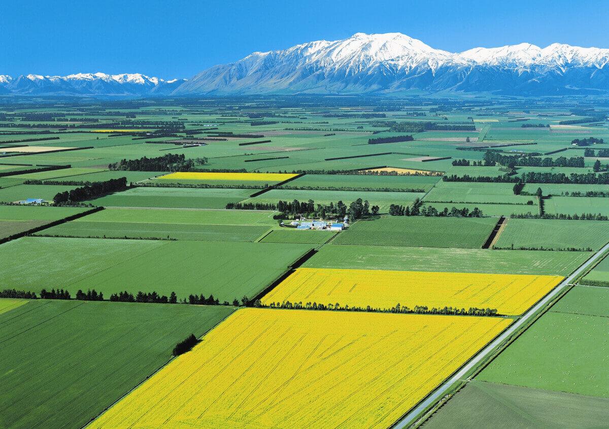 New Zealand Farms Minified x