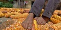 cornman