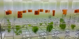 New technique may yield gene-edited plants in a few weeks, instead of 9 months