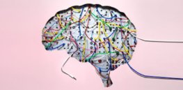 brain wires x