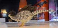 feathered dinosaur adapt