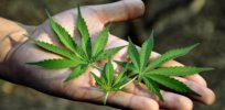 marijuana pot in hand