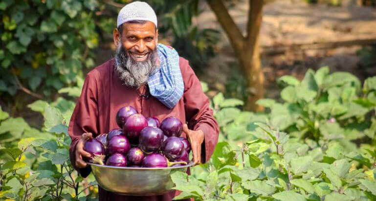 Success of insect resistant Bt eggplant in Bangladesh opened door to GMOs  in the developing world | Genetic Literacy Project
