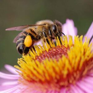 bees 9 11 18 3