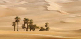 archaeologists find year old tools in desert of Saudi Arabia
