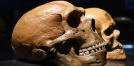 Neanderthal human interbreeding