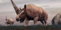 siberian rhino sh jef hpMain x