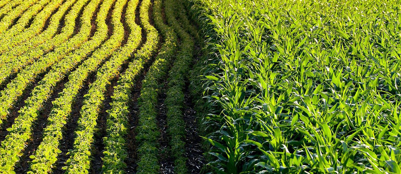 crops 12 12 18