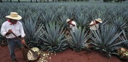 tequila shortage internal