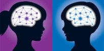 gender brains