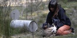 4-8-2019 tasmaniandevil