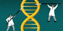 5-16-2019 yalenews editing genomes msh