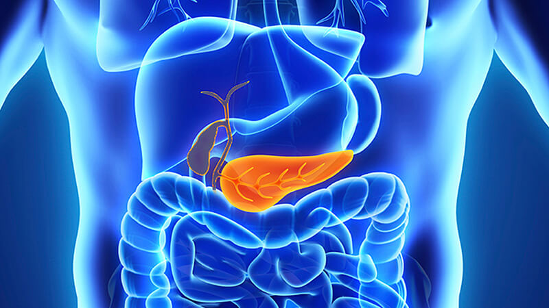 is pancreas x