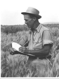 borlaug wheat tif
