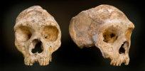 gibraltar neanderthal full width