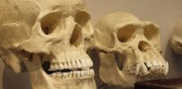opinion confronting creationism l