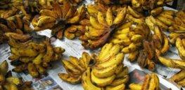 bananageddon