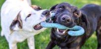 dog friendly dog breeds