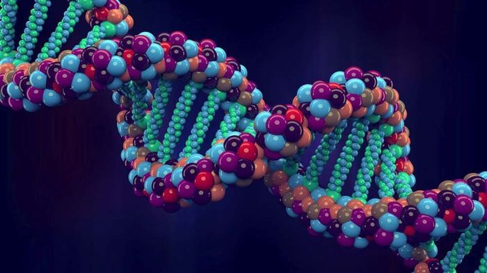 genome project–write scientists create synthetic human genomes