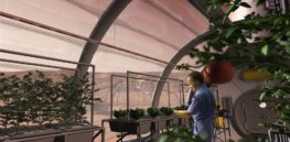 potatoes in space greenhouse