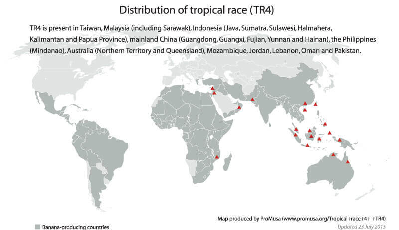 tropical race 4