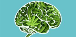 vpr vermont edition brain marijuana cannabis youth mental health istock feodora chiosea