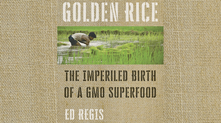 golden rice crop