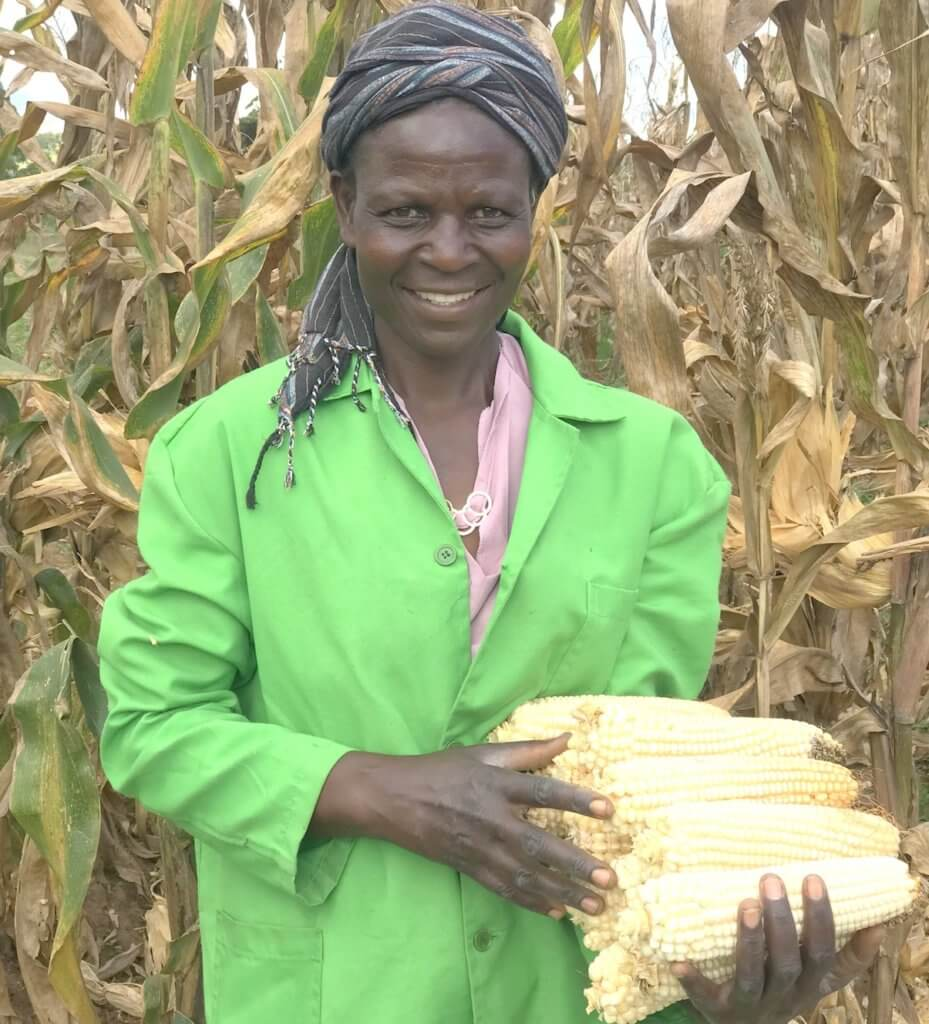 happy farmer holding bt maize harvest
