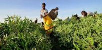 smallholder farmer in east africa resized