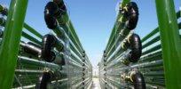 algenreactor