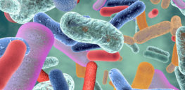 benefícios da suplementação do probióticos