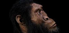 w p x australopitheque