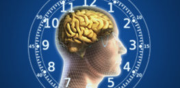 human brain body clock wallpaper
