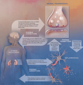suicide infographic neurobiological pathways