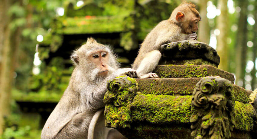monkey forest x