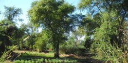 treesonfarms