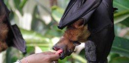 bats humans coronavirus