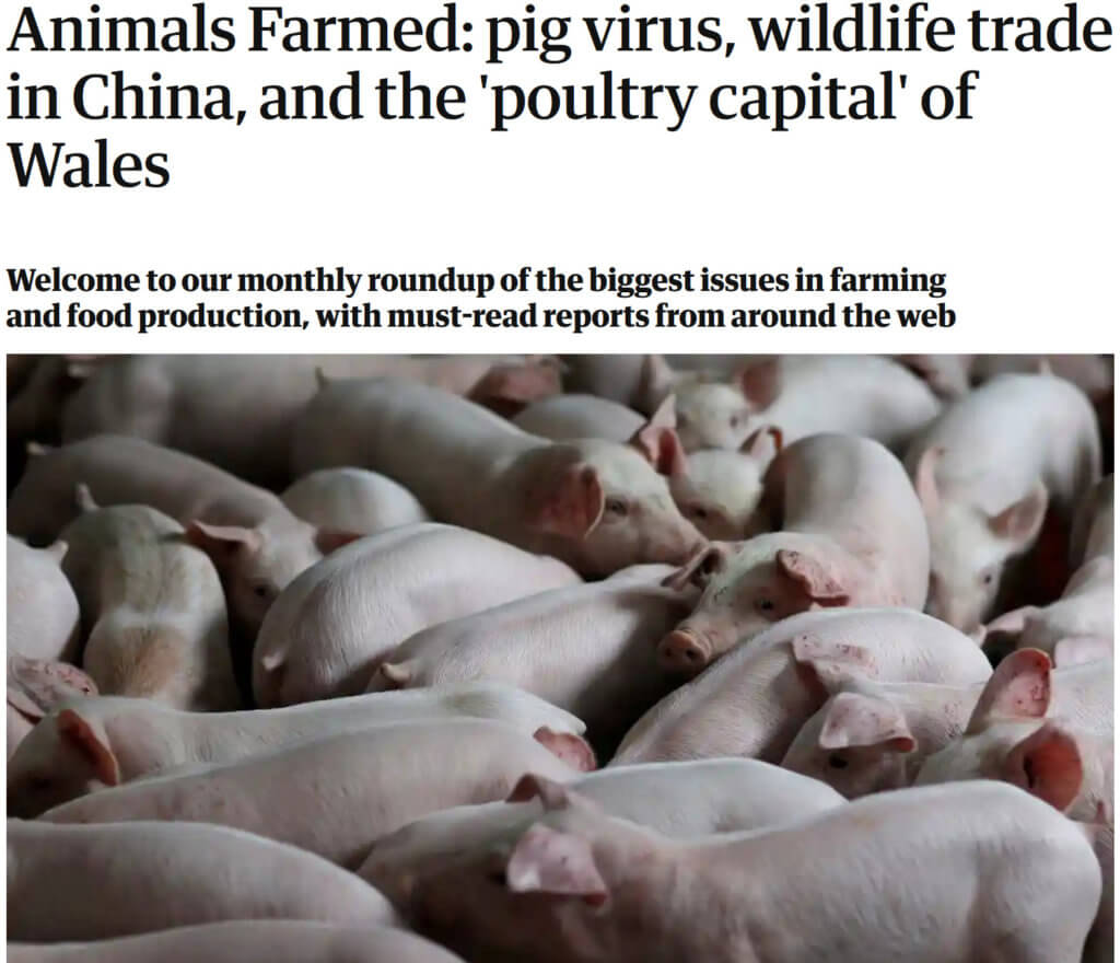 screenshot animals farmed pig virus wildlife trade in china and the poultry capital of wales