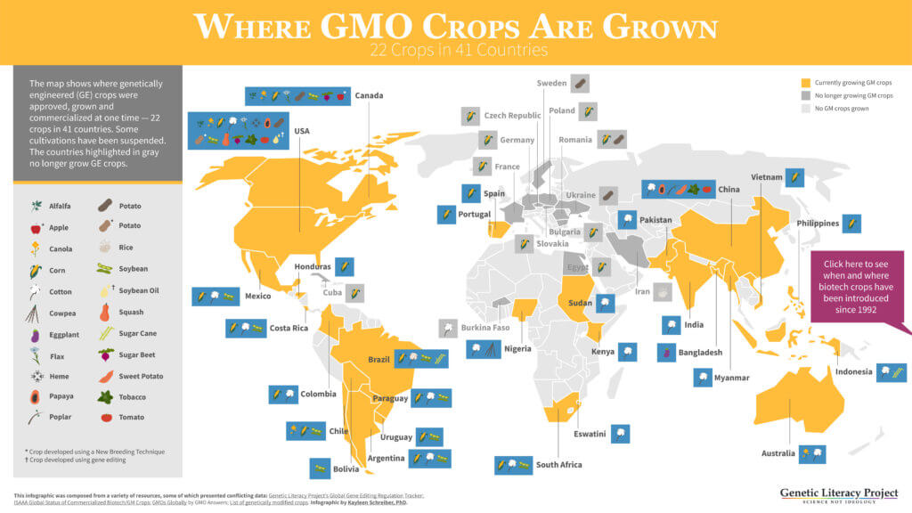 where gmo crops are grown glp infographic