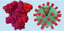 coronavirus genome bad news wrapped in protein promo threebytwosmallat x